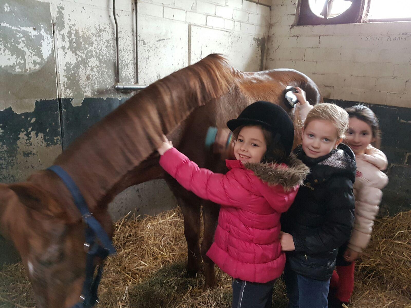 Voorkeur Kinderfeestjes - Manege 't Zandeind &TO61